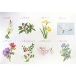 Postcard Spring 03